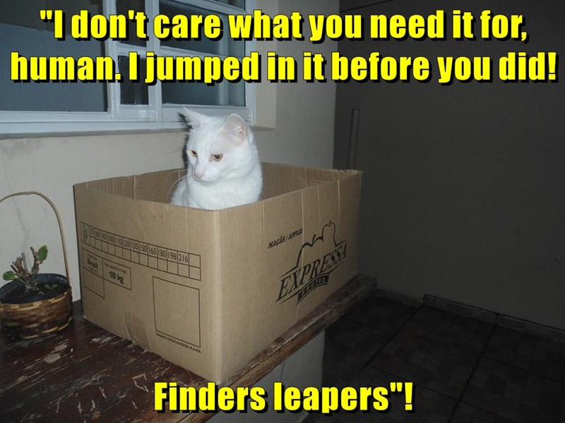 animals cat finders human caption leapers need - 8795953920
