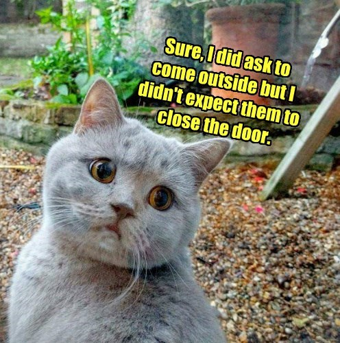 door cat outside ask expect didnt close caption - 8795970304