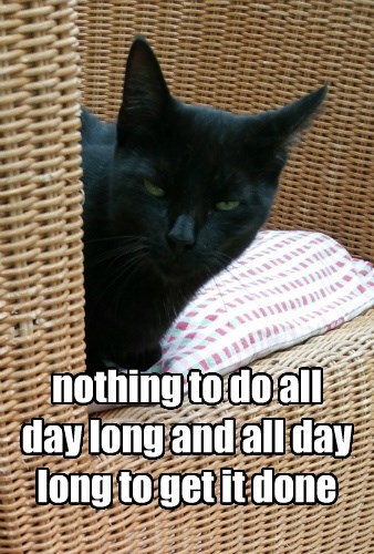 cat long to do all day nothing caption - 8796043008