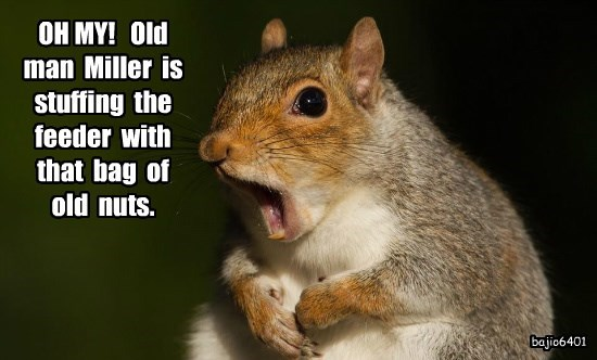 OH MY!   Old  man  Miller  is  stuffing  the feeder  with  that  bag  of  old  nuts.