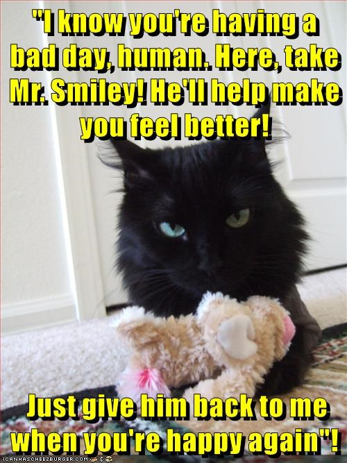 animals cat feel better mr smiley human bad day caption - 8796108800