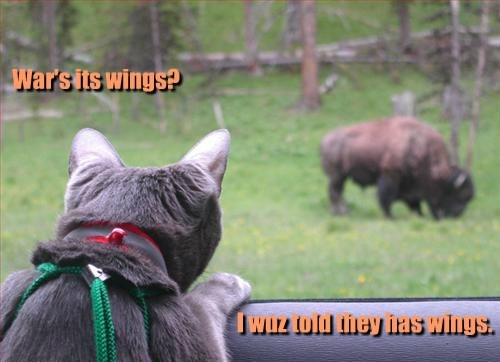 cat,buffalo wings,caption