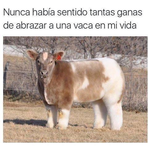 abrazar una vaca