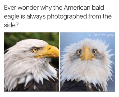 eagles freedom image So Majestic