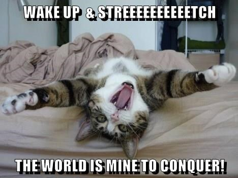 world,cat,wake up,conquer,caption,stretch