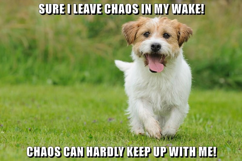 caption,dogs,chaos
