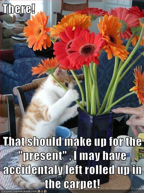 animals cat present caption accidentally carpet - 8796246016