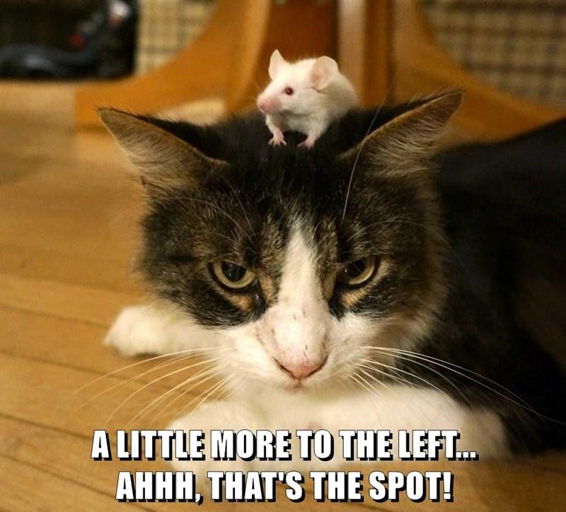 animals cat caption more spot left - 8796258560