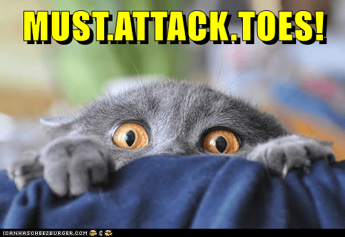 animals toes cat attack caption - 8796361984