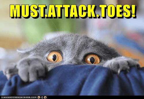 animals toes cat attack caption - 8796361984