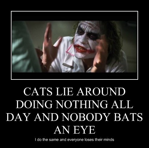 CATS LIE AROUND DOING NOTHING ALL DAY AND NOBODY BATS AN EYE I do the same and everyone loses their minds