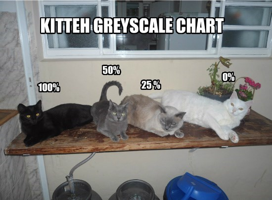 caption Cats greyscale - 8796400640