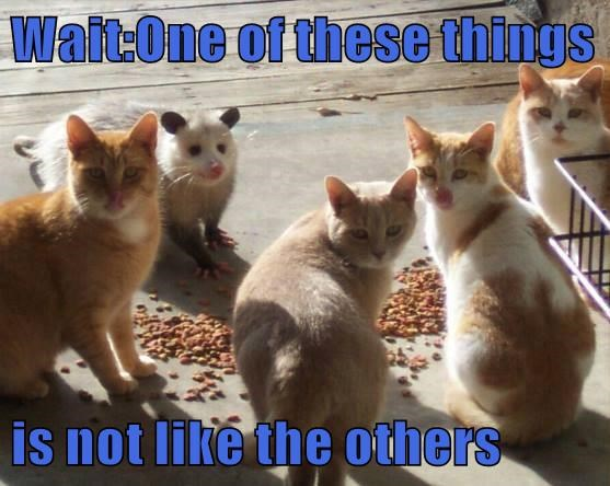 animals like one of these things others not caption Cats - 8796444928