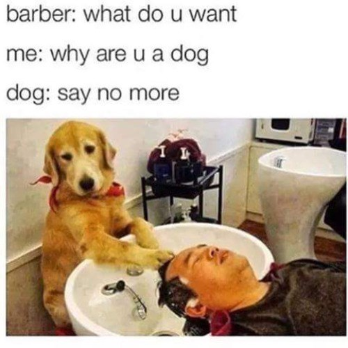 memes haircut dogs Don't Worry, It'll Grow Out