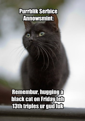black cats good luck friday the 13th bad luck caption Cats - 8796456192