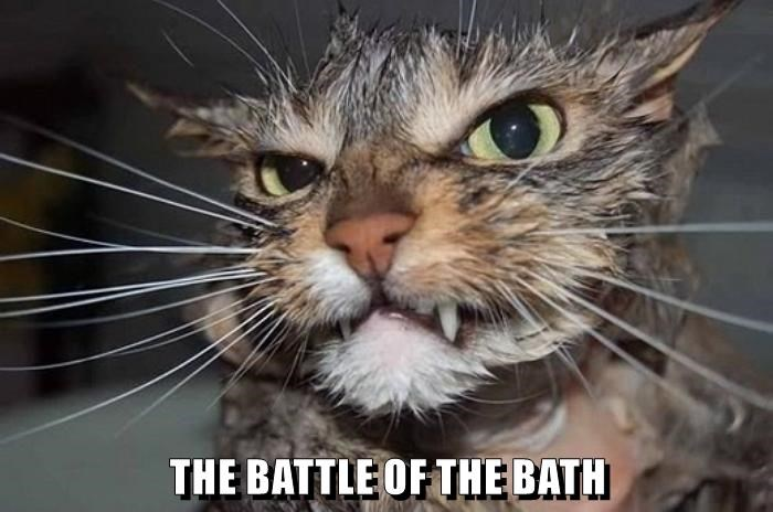 Battle,Cats,bath,caption