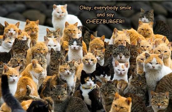 caption Cats smile
