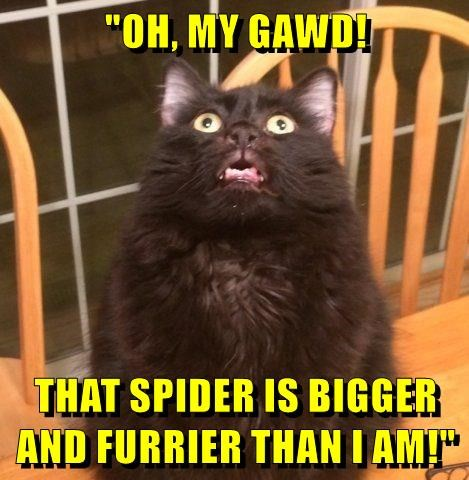 cat,caption,spider,shock
