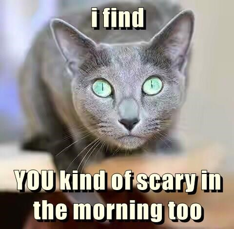i find  YOU kind of scary in the morning too