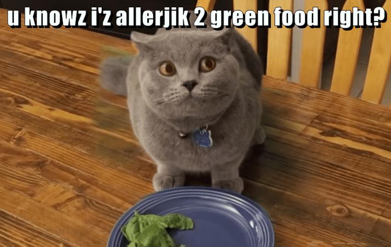 animals allergic cat caption food green - 8796703488
