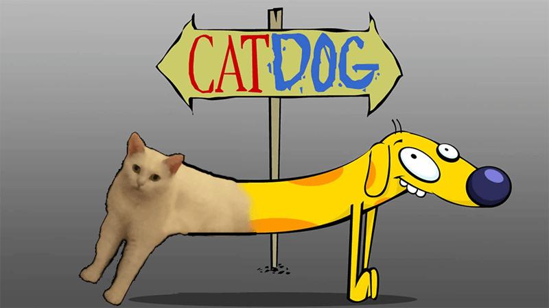 Cartoon - CATDOC