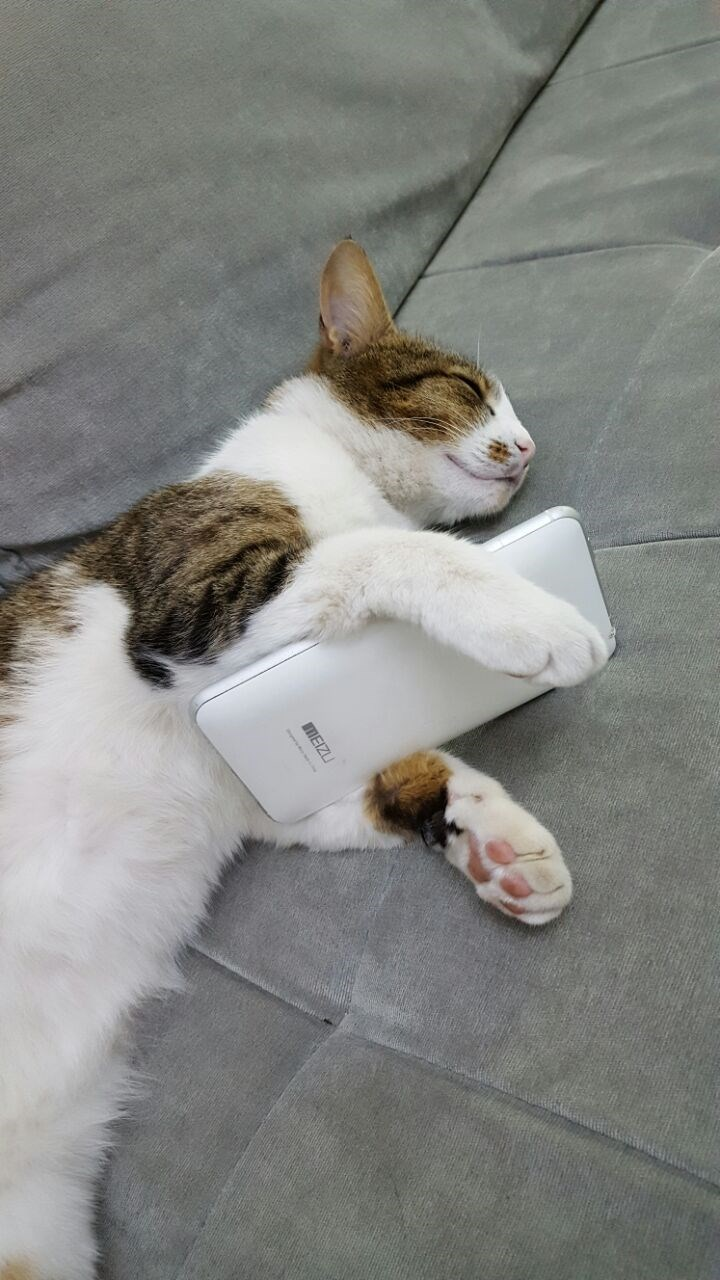 cat fell asleep looking at phone