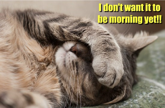 cat morning caption - 8796738304