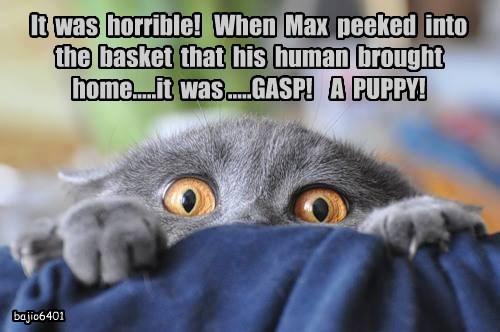 puppy caption Cats - 8796819456