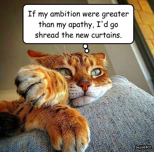 cat shredded apathy ambition curtains greater caption - 8796979456