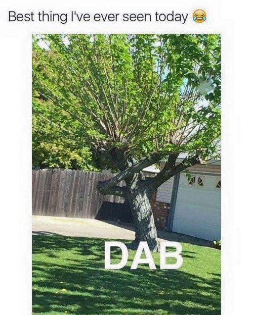 image tree dab Behold the Gentle Beauty of Mother Nature