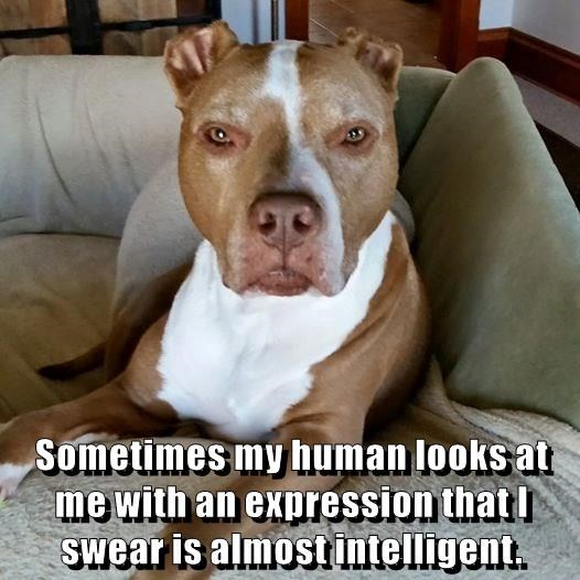 dogs,human,caption,intelligent