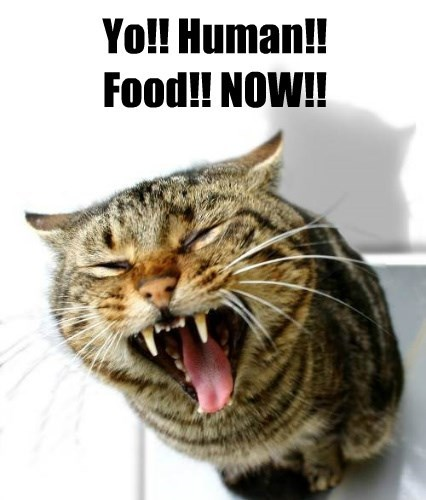 cat now human yo food caption - 8797050624