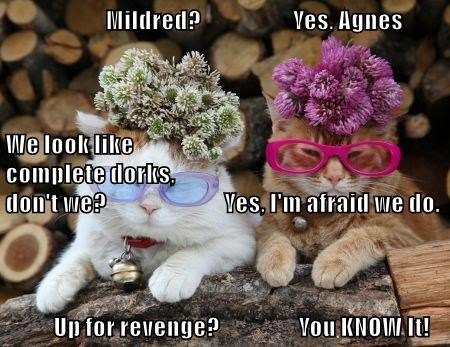 animals dorks revenge caption Cats - 8797062912