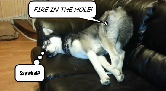 dogs fleas fire hole caption high tech - 8797120512