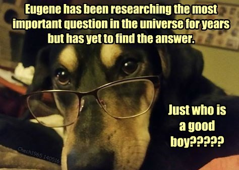 question,dogs,important,researching,good boy,caption