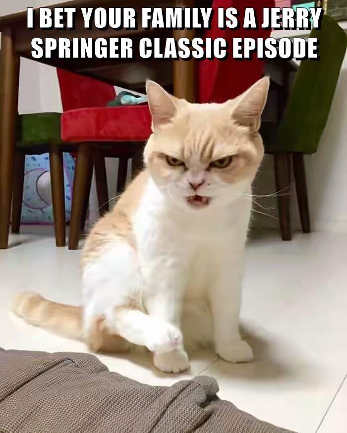 animals cat caption family episode classic jerry springer - 8797204480