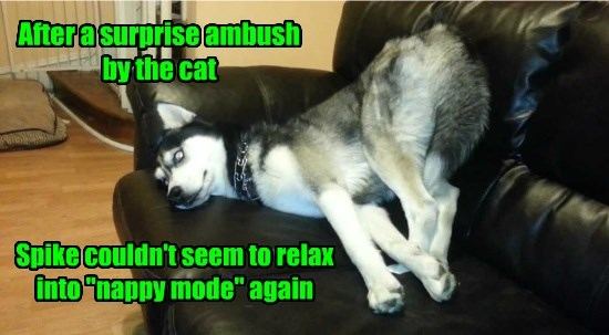 cat dogs ambush caption relax nap