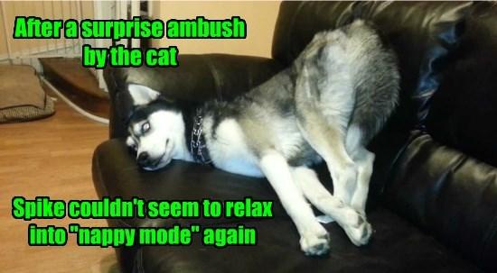 cat ambush caption relax nap - 8797238016