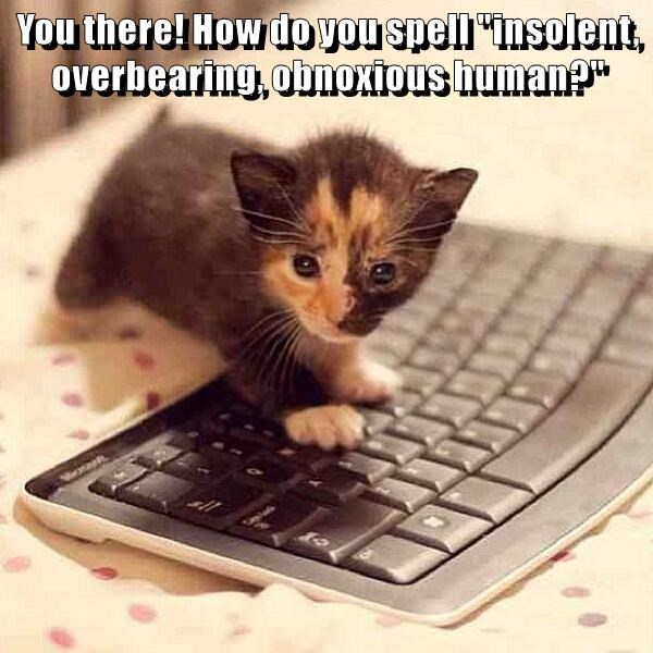 """You there! How do you spell """"insolent, overbearing, obnoxious human?"""""""