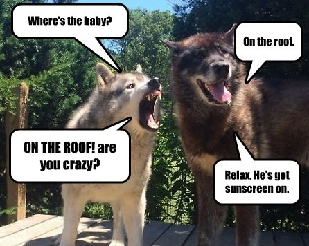 crazy dogs roof baby caption - 8797287168