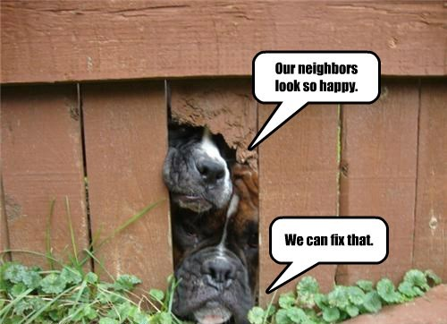 dogs,fence,caption,neighbor