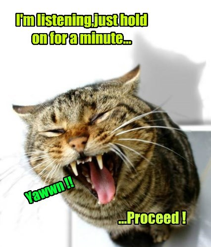 cat caption listening minute hold on proceed yawn - 8797308416