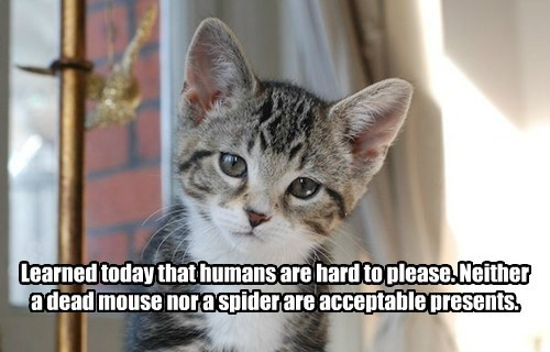 caption,kitten,humans,mouse,presents,spider
