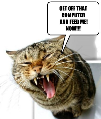 cat computer caption food - 8797394944