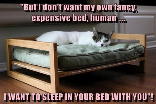 animals you cat bed sleep expensive caption dont want - 8797411584