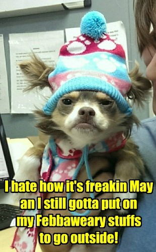 dogs may cold february caption hat - 8797425152