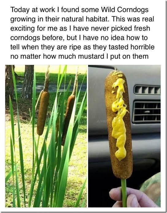 mustard failbook facebook corn dog - 8797433856