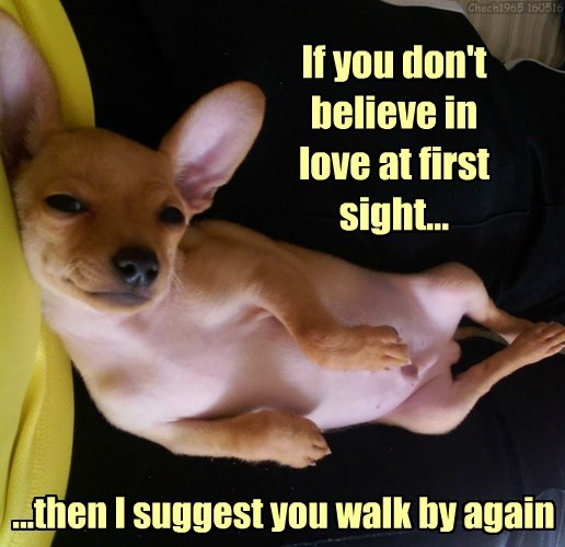 love at first sight dogs caption - 8797547520