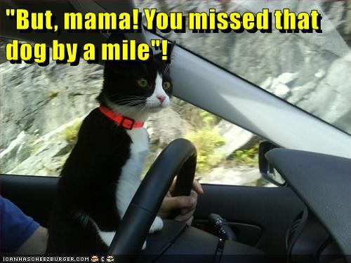 animals cat mama caption car