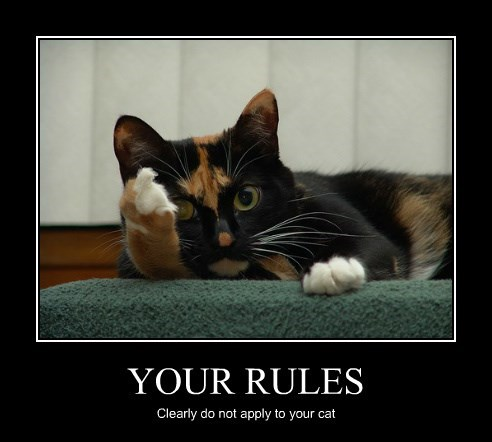 YOUR RULES Clearly do not apply to your cat